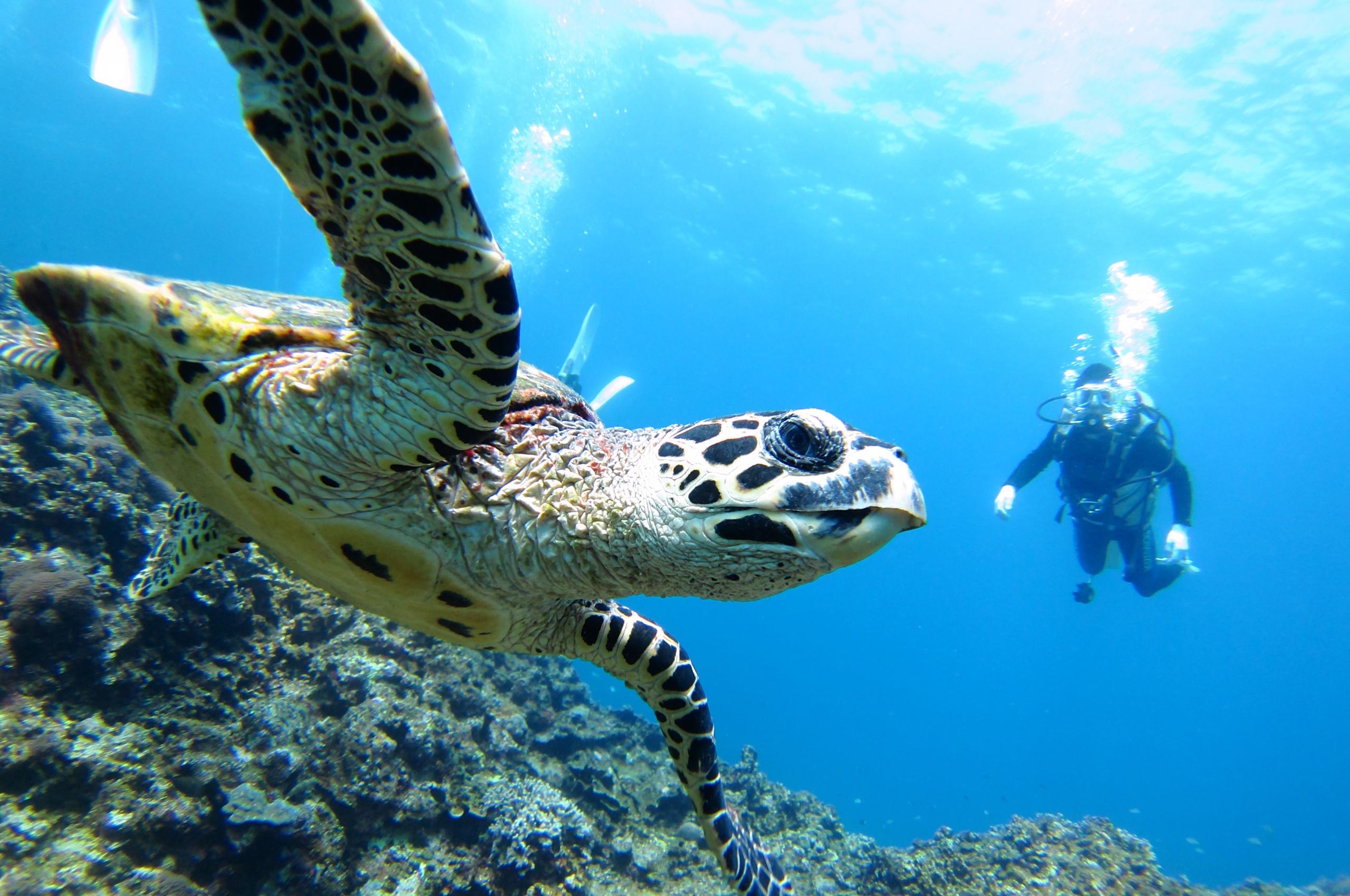 沖縄県でダイビング